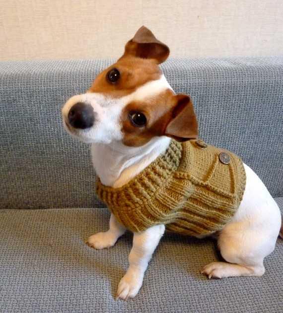 как связать свитер для собаки по схемам