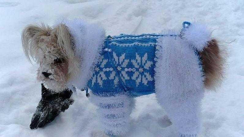 вязание спицами для собак по схеме с описанием и видео уроком